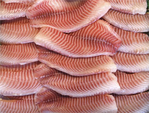 Tillapia fillets