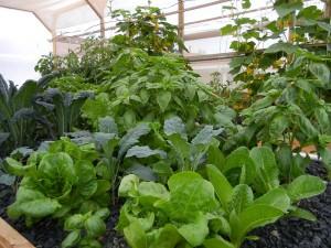 farm 8 3 2012b aquaponics