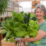 Phyllis Davis, Co-Inventor, Harvesting fresh greens from their Portable Farms.
