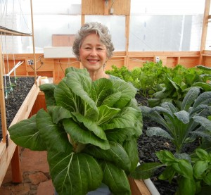 Phyllis Davis, President, Portable Farms Ltd holding a single head of Bok Choy in this Portable Farms Aquaponics System in only 45 DAYS!.
