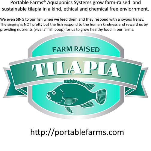 farm raised tilapia