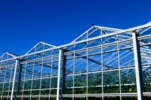 greenhouse4