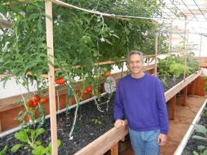 Colle Davis, Lead Inventor, CEO of PFAS LLC, standing in front of a few tomato plants (10' tall) that supply hundreds of tomatoes while they're planted in a Portable Farms Aquaponics System. We generally leave the tomatoes in the grow trays about six months and then replant new tomatoes because their root systems grow too large (size of a football) for the grow trays.