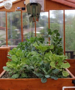 A small back yard Portable Farms® Aquaponics System.