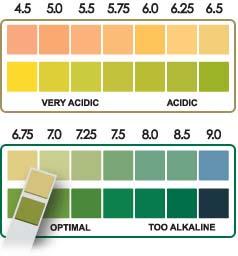 Nutrient Absorption Occurs Below 7 2 Ph