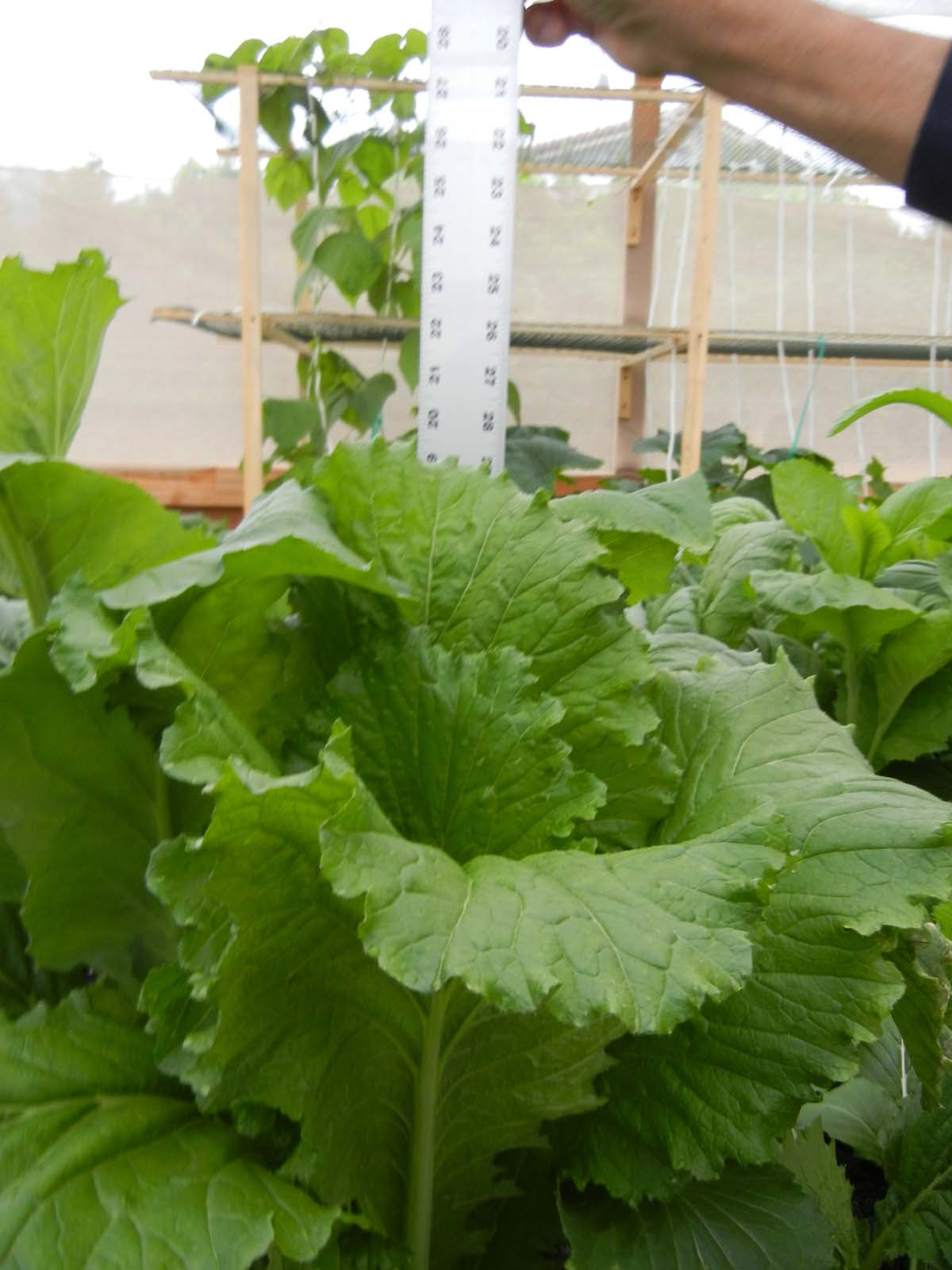 Labeled Plant Organs Organic India Mustard Plant a