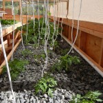 Knot soft clothes line rope on top wire from top tray to support growing plants for vertical growing.