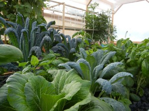 farmnewsletter aquaponics