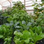green interior 8 3 2012 aquaponics