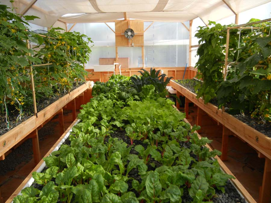 What makes portable farms aquaponics systems different for Aquaponics fish food