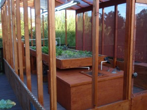 aquaponics back yard farm