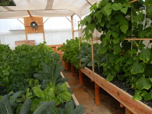 Interior of a Portable Farms Aquaponics System. Photo taken January 3, 2012.