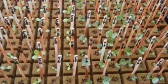 seeds 8 18