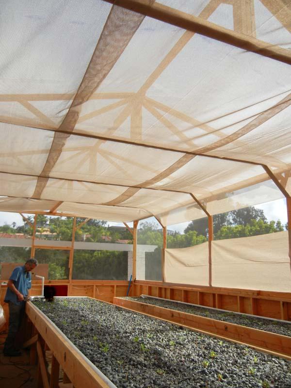 Commercial Aquaponics Farmer