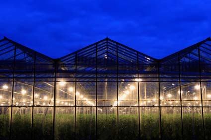 Starting a commercial greenhouse business plan