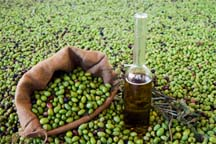 olive oil in olives