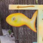 portable-farms-fish-tilapia