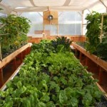 portable-farms-grow-trays-organic-food