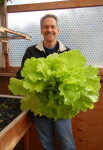 Colle Davis harvesting a single head of Tokyo Bekana - a mild Asian green ideal for salads.