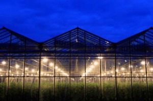 portable-farms-commercial-greenhouse-growing