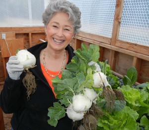 Phyllis Davis harvesting several kohlirabi. Kohlrabi is similar to the cabbage family with a taste much like a broccoli stem. Can be eaten raw or cooked.