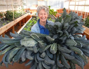 "Phyllis Davis, Co-Inventors Holding 8 large heads of kale (leaves 46"" long) in a Portable Farms® Aquaponics System."