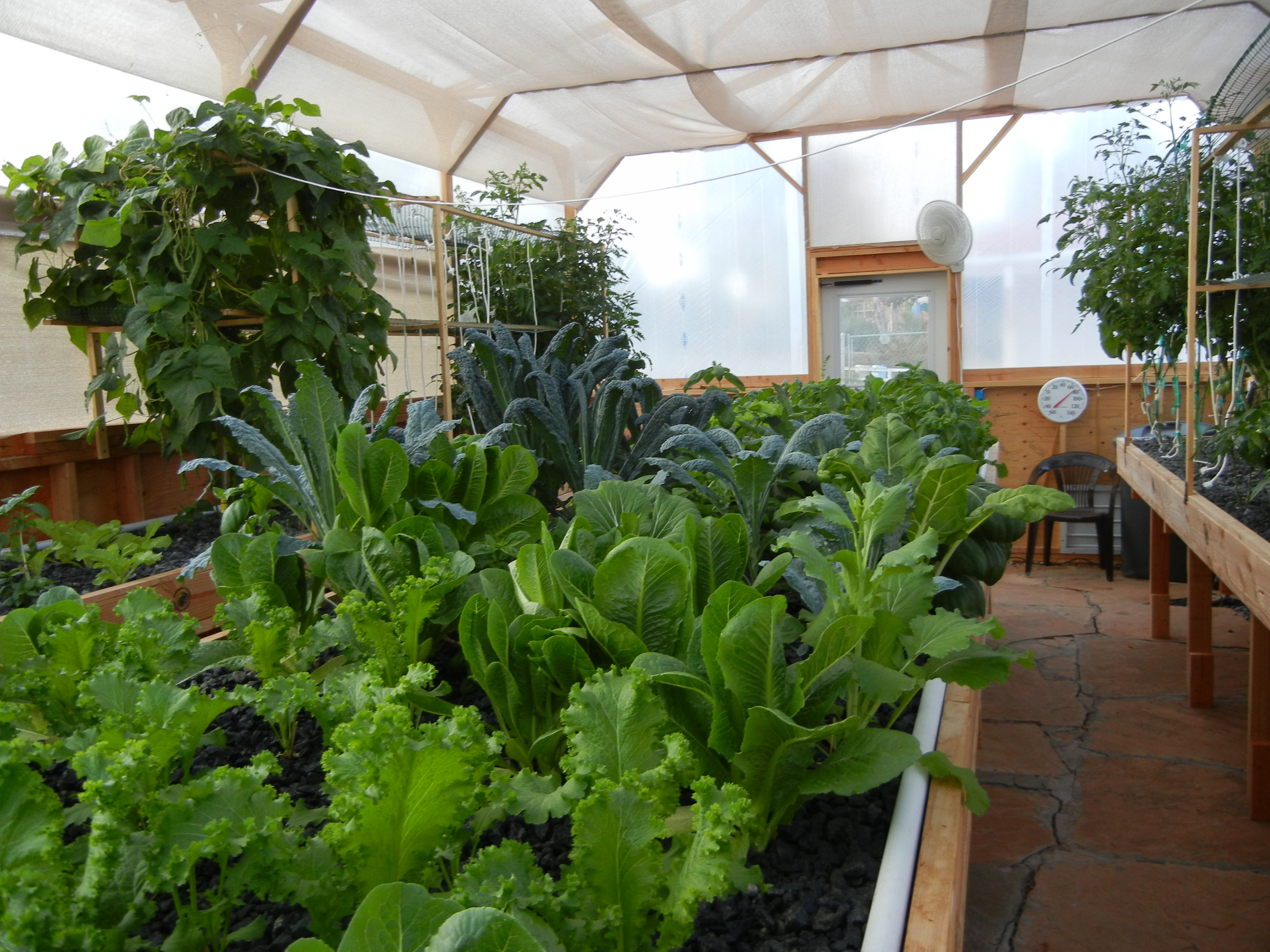 aquaponics in cold climates works great