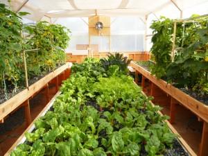 grow tray 2013a