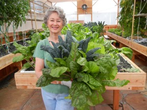 Phylis Davis harvesting fresh greens.