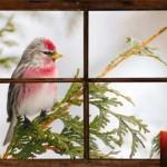 BIRD IN WINDOW