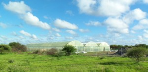 Commerical 10,000 sq ft Portable Farms Aquaponics System in Botswana, Africa