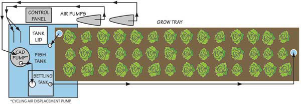 Commercial Aquaponics – Portable Farms® Aquaponics Systems on home stereo system design, home build aquaponics system, home built aquaponic systems, homemade hydroponics system design, home drip irrigation system design, home solar system design, home water system design, home aquaponics greenhouse design, home aquaponic gardening, home biogas system design, aquaponic filter design, home aquaculture tanks, home plants design, home aquaponic setups, aquaculture system design, home hydroponics design,