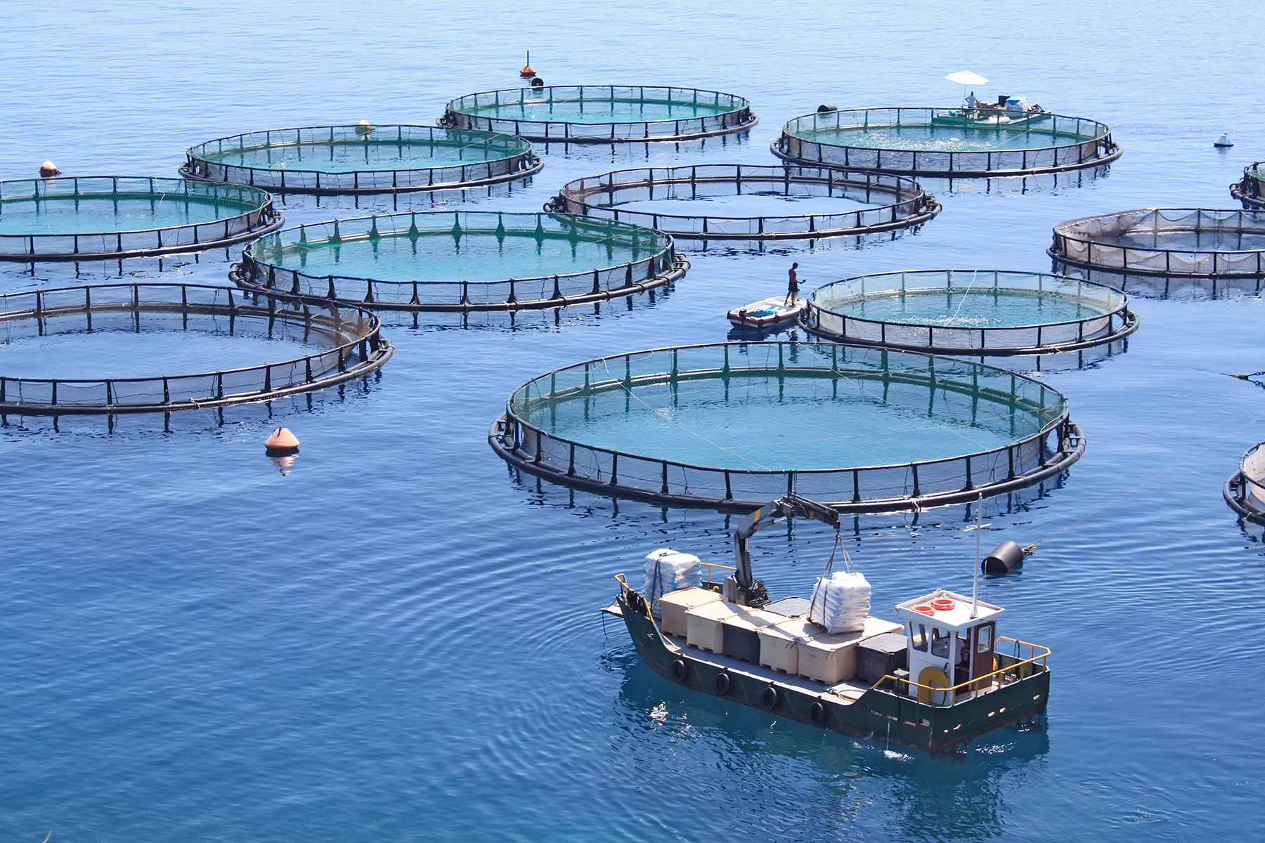 fish production The gap widened in 2012, with output from fish farming—also called aquaculture—reaching a record 66 million tons, compared with production of beef at 63 million tons and 2013 may well be the first year that people eat more fish raised on farms than caught in the wild.