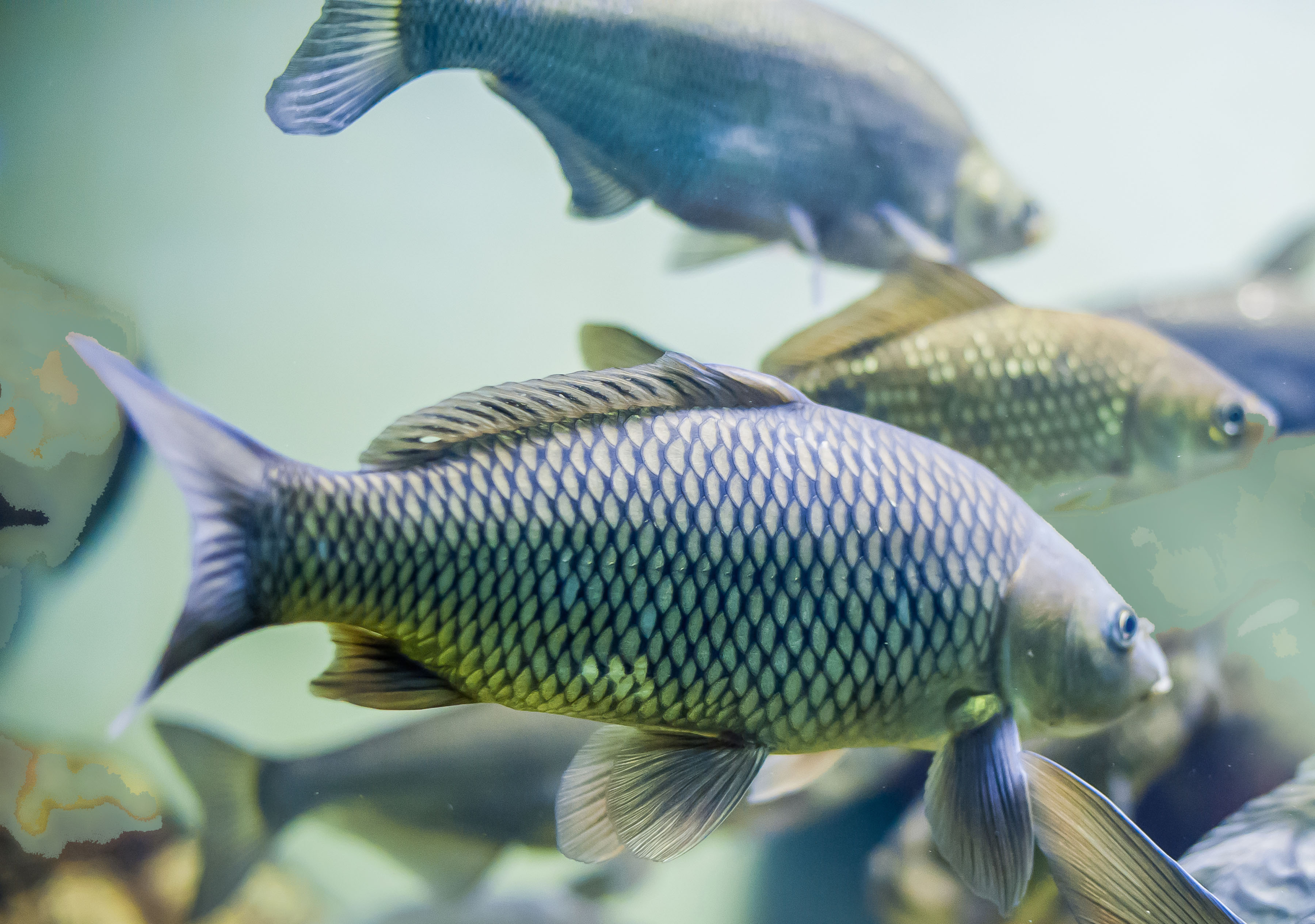 What Fish Work Best In Aquaponics